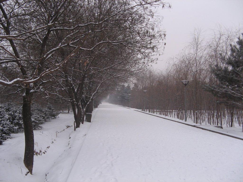 路(the Road in Arding Botanical Gardon), Баотоу