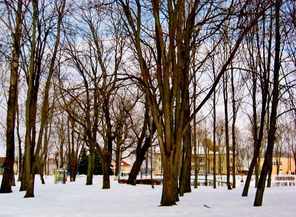 27.02.2013 13:58  Аллея зимнего парка., Бешенковичи