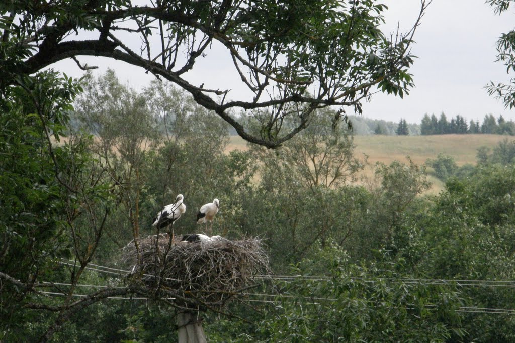 Storks, Друя