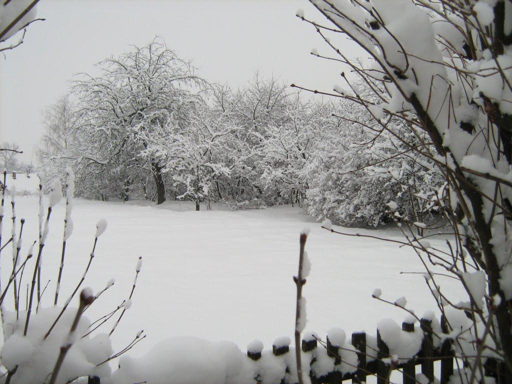 Дубровно в снегу. 2008, Дубровно