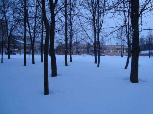 ліпавы парк каля сярэдняй школы №17, Орша