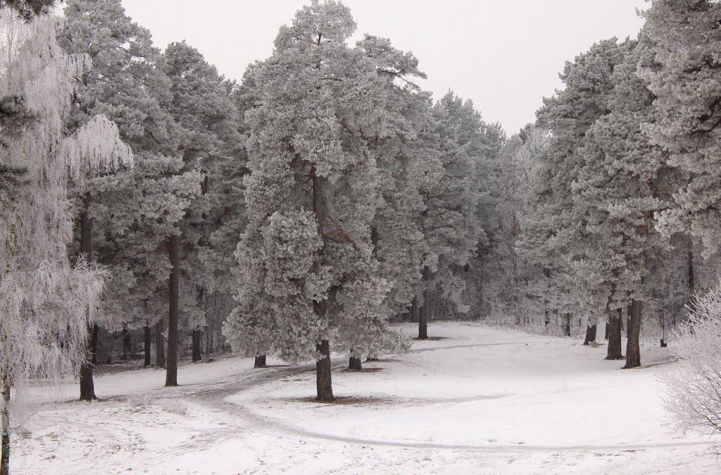 Зима в Сенно, Сенно