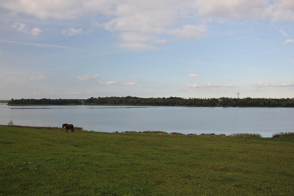 Сенненское озеро - купалье, Сенно