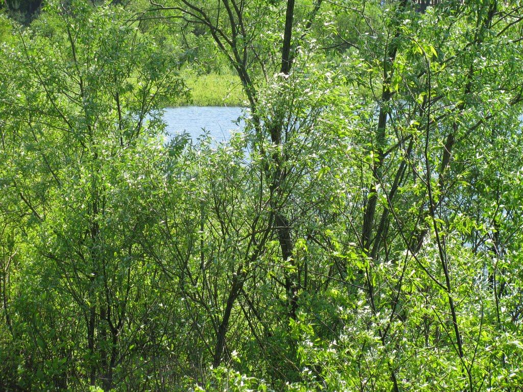 Озеро возле Сожа, Белицк