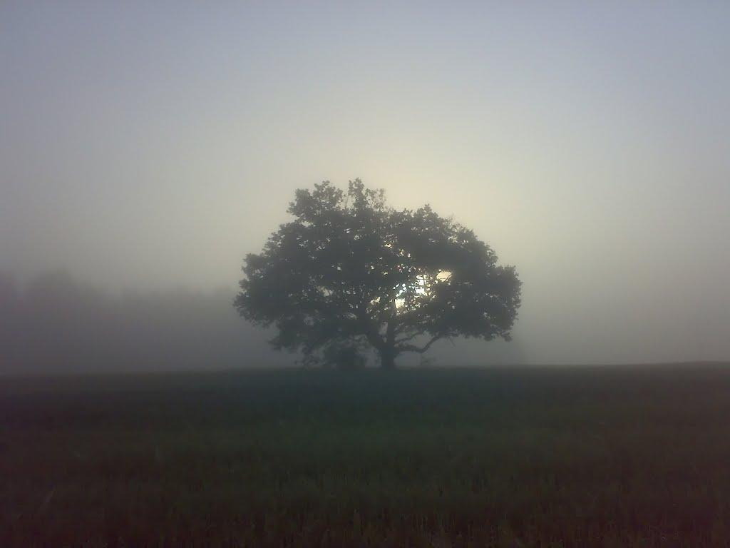 А дубы-колдуны что-то шепчут в тумане..., Белицк