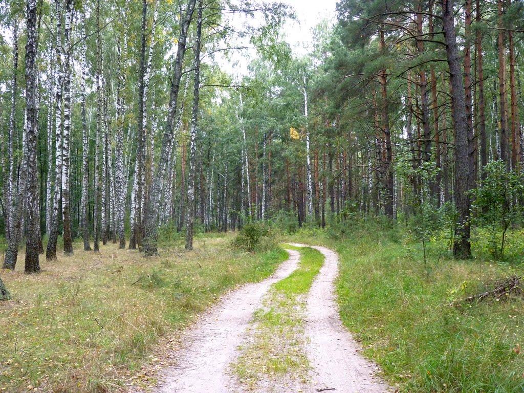 Лесная дорога., Васильевка