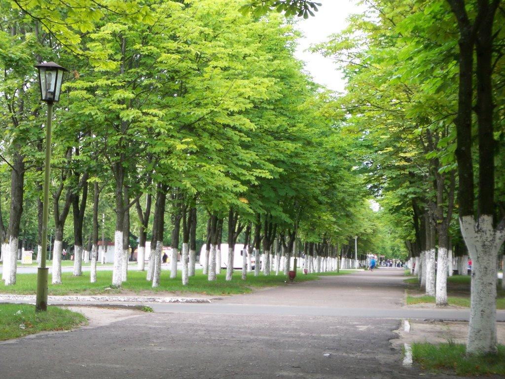 Avenue, Светлогорск
