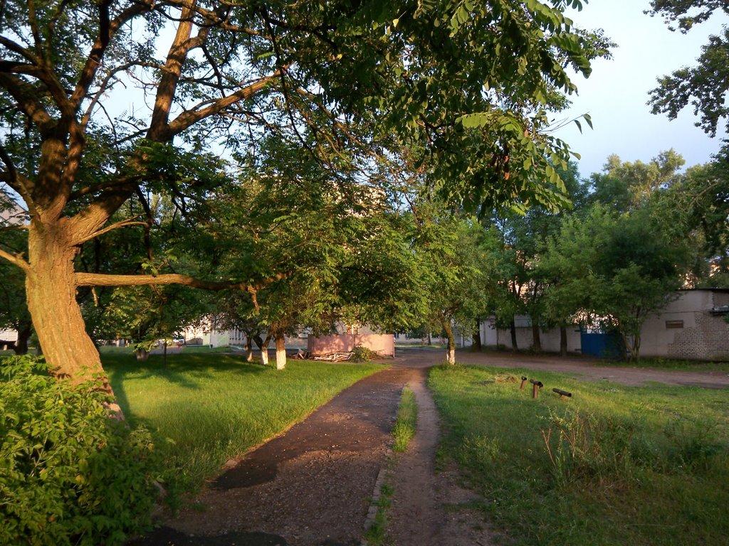 Sun in Acacia, Светлогорск