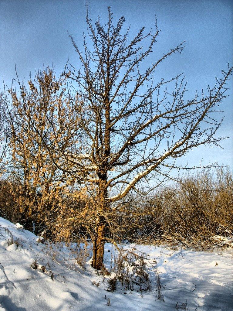 Дерево, Зельва