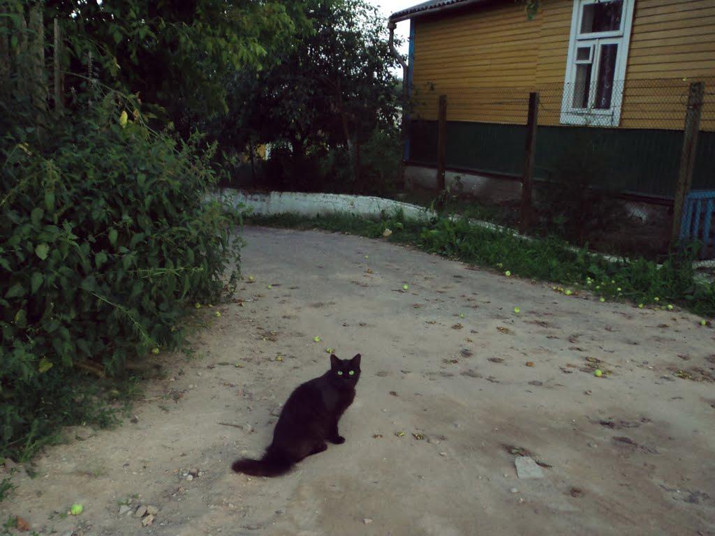 Кот, Слоним