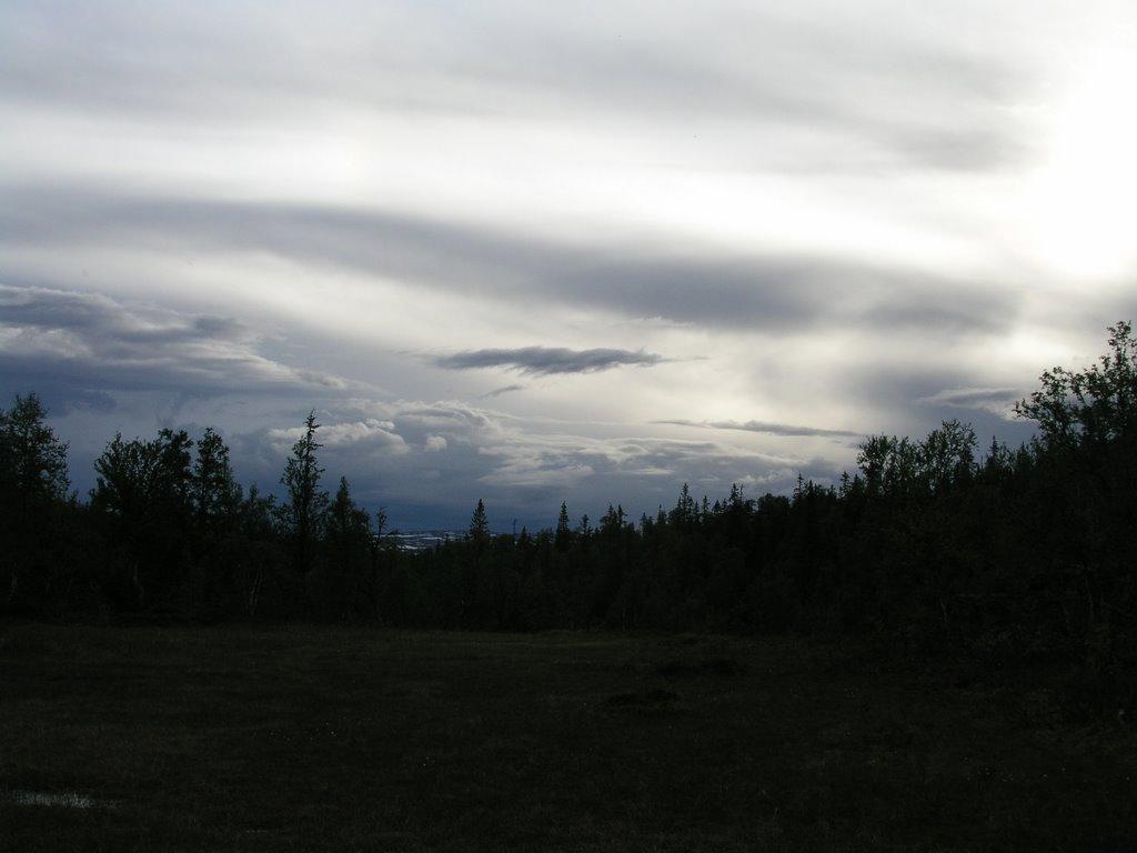 Stormattistjørna unprotected old-growth forest 3, Боде