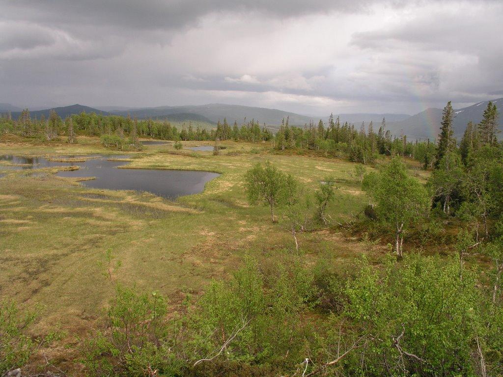 Stortissvatnet unprotected mountainous forest, Боде
