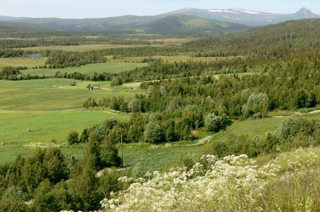 Berglimyr-Klumplifjell- Lakavasshatten, Боде