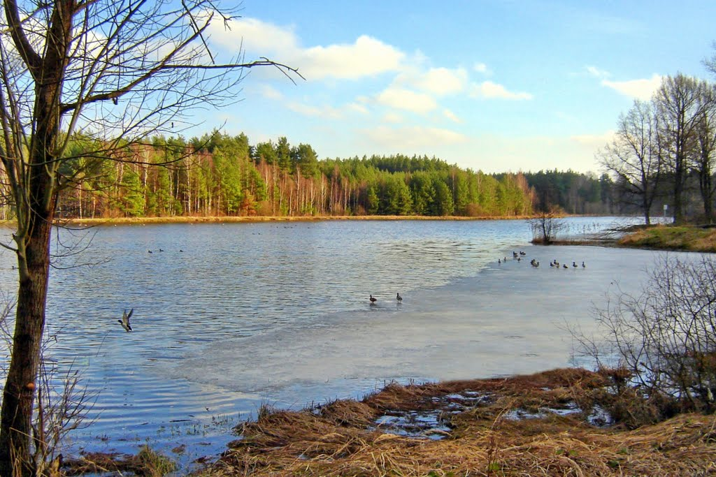 Zalew Klików -kaczki na lodowisku, Дзирзонев