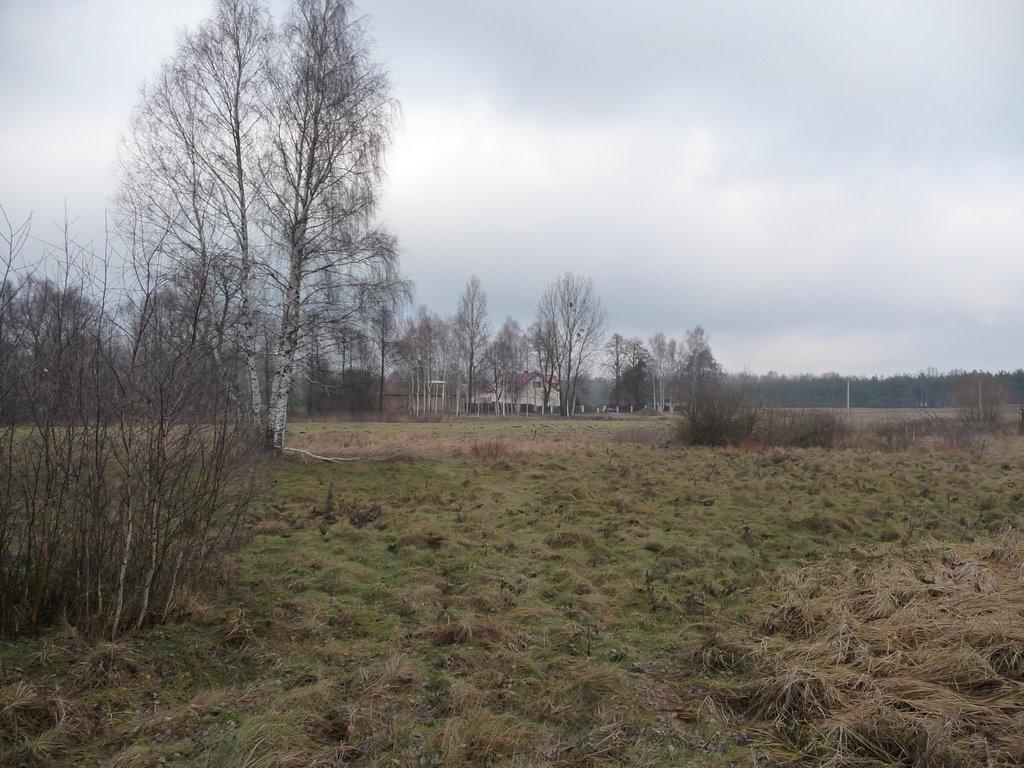 Zakręt leśnej drogi - północ/north, Пьястов