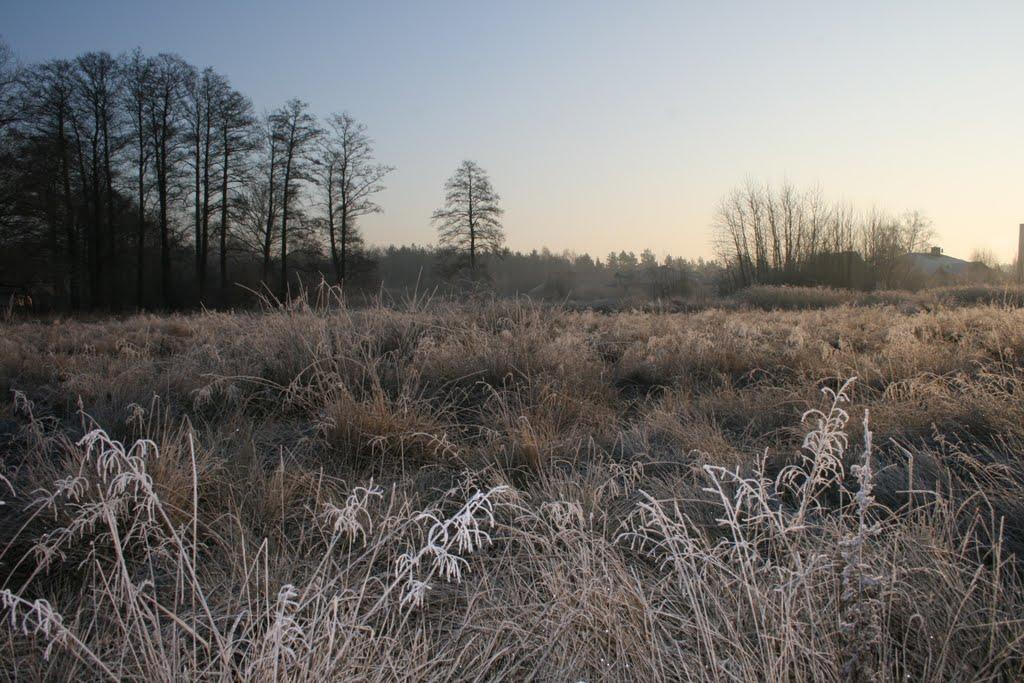 winter meadow (zimowa łąka), Пьястов