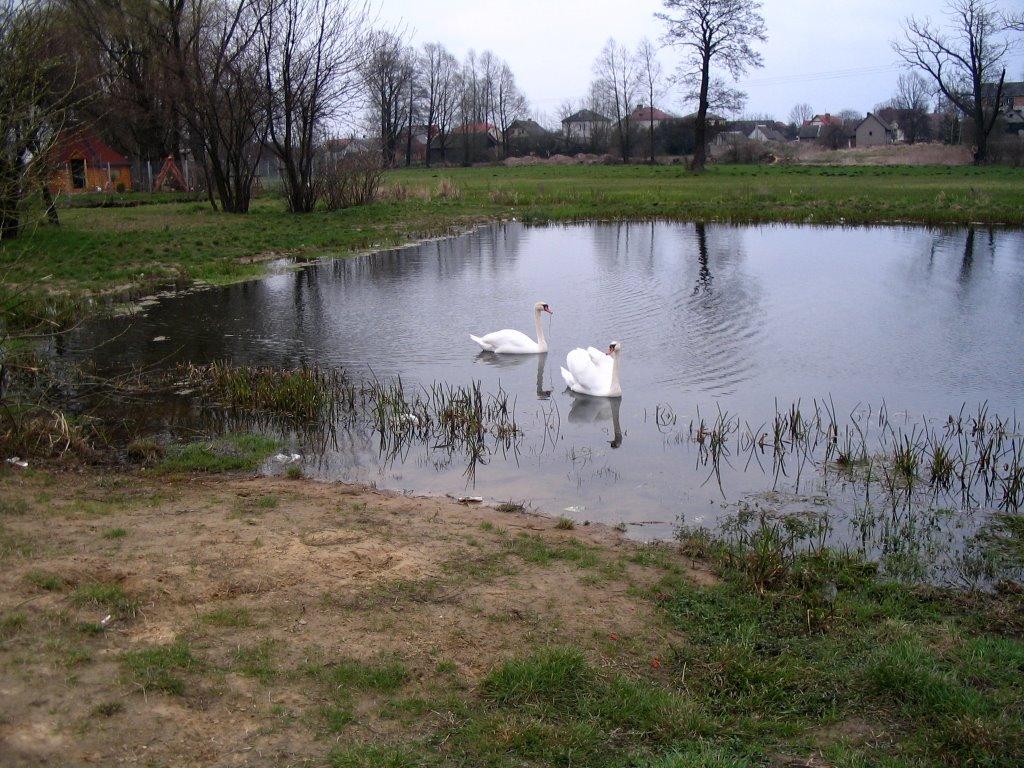 Bielsk Podlaski - staw (pond), Бельск Подласки