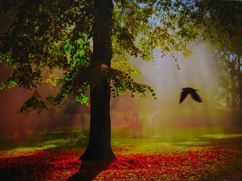 POL Gdansk Park near Napoleons Fortress by KWOT {Subtitle: EARTH PHOTO by KWOT} ♥♡♥♡♥♡♥♡♥♡, Гданьск