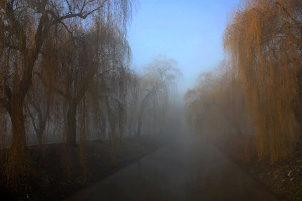 spacerując we mgle / walking in the fog, Сосновец
