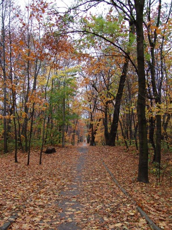 Jesienna droga w lasku bytkowskim, Честохова