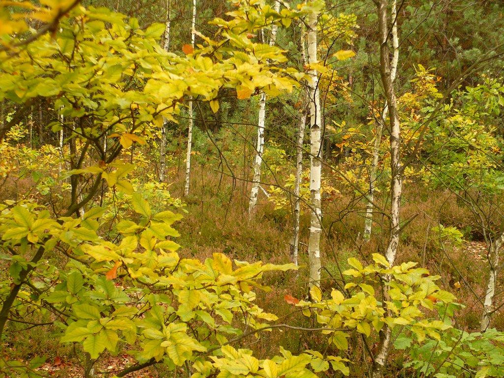 Autumnal forest, Ловиц