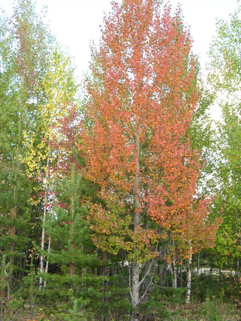 Осень, Радужный