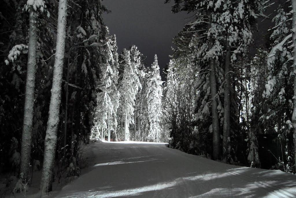 Прогулка в зимнем лесу, Ханты-Мансийск