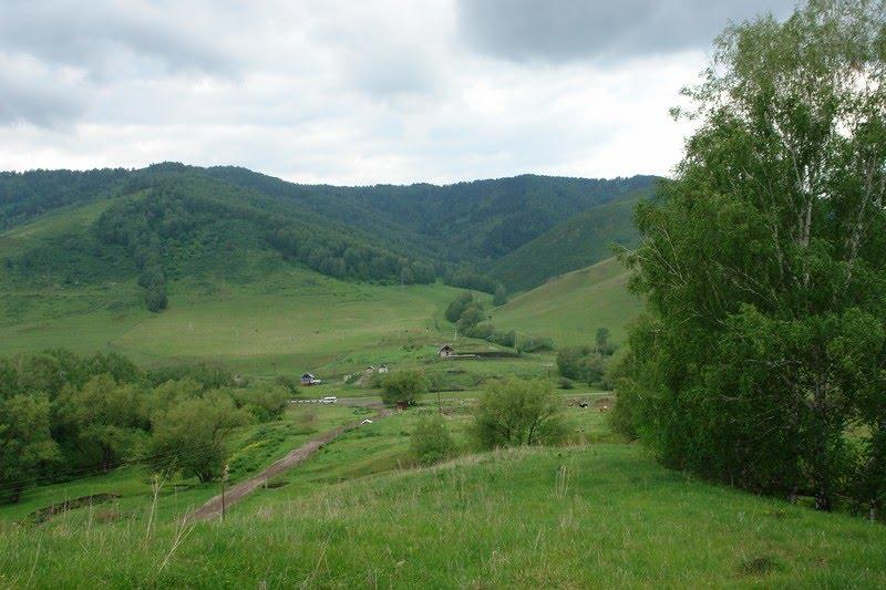 Sarasinskie dachi, Алтайский