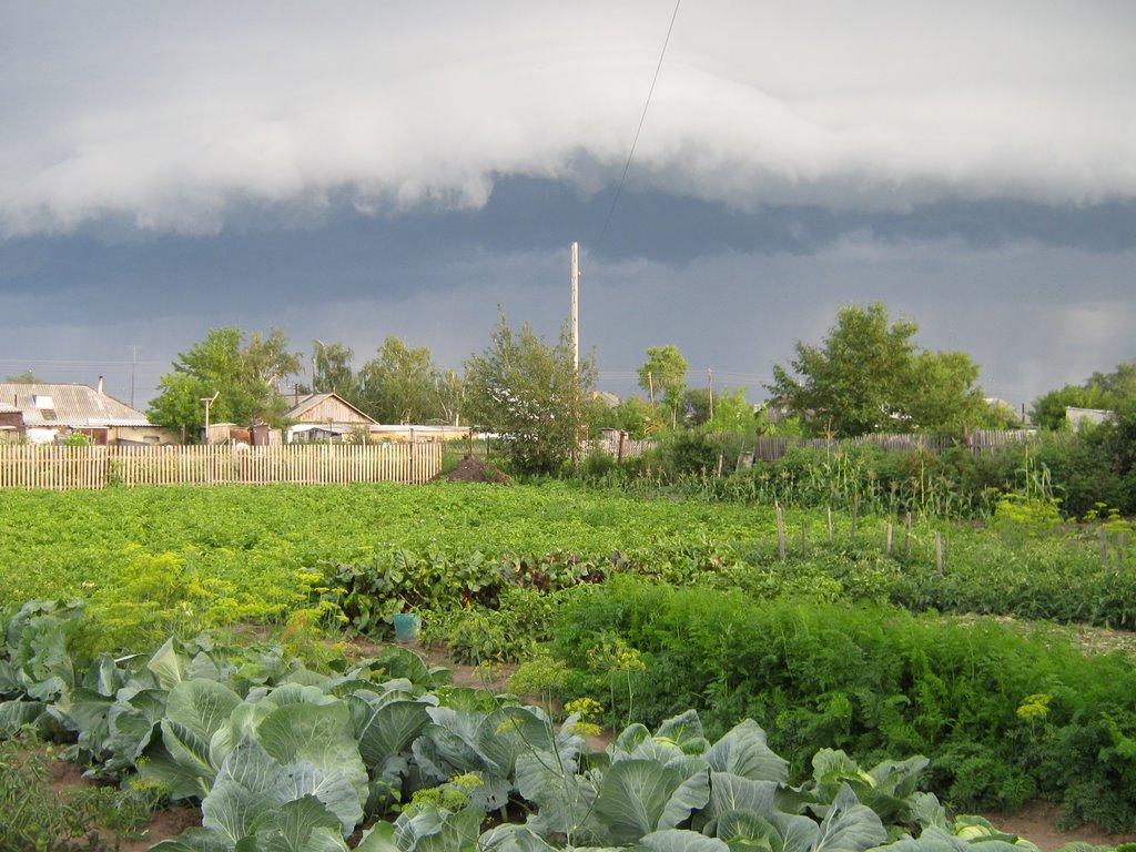 Огород, Бурла