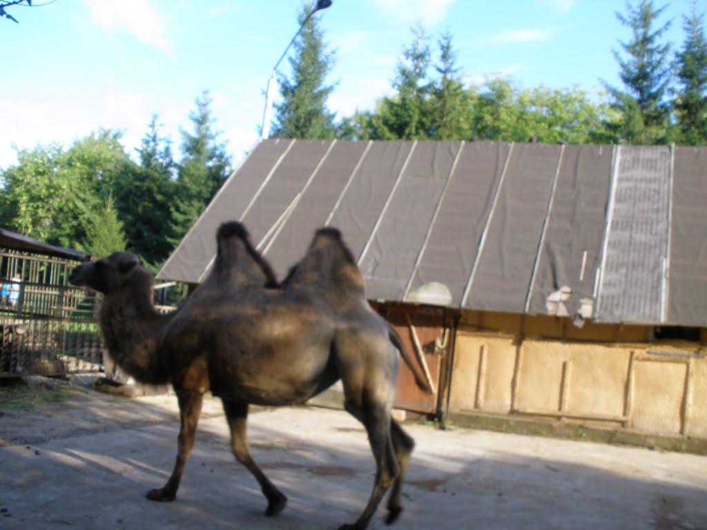 Зооуголок в городском парке Новоалтайска, Новоалтайск