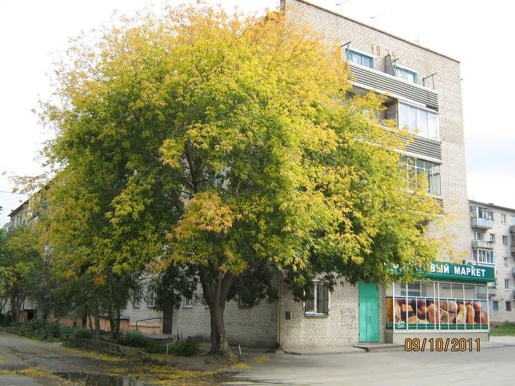 Клен у дома, Новоалтайск