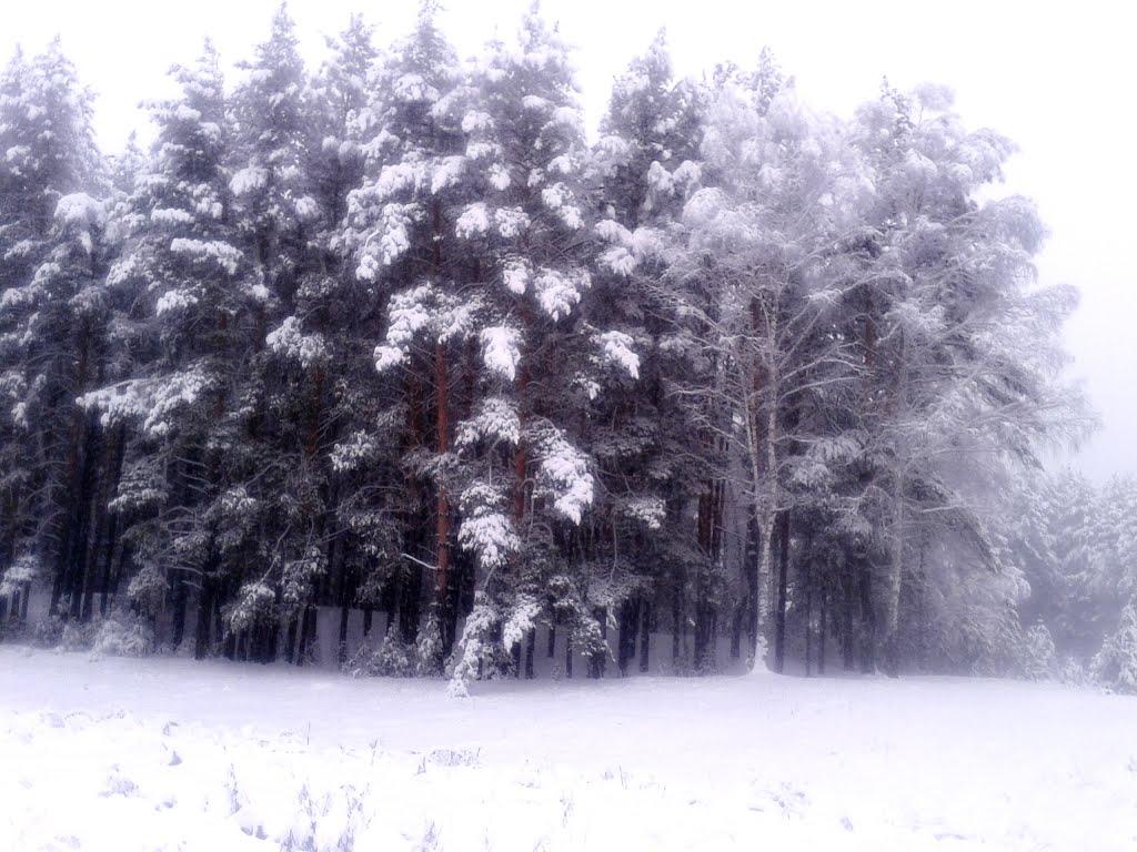 Зимний бор, Троицкое