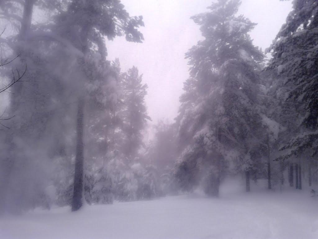 На лыжной трассе, Троицкое