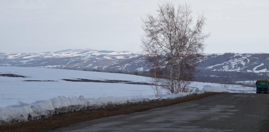 Алтайский край. Бийский район. Окрест с. Шебалино, Шебалино