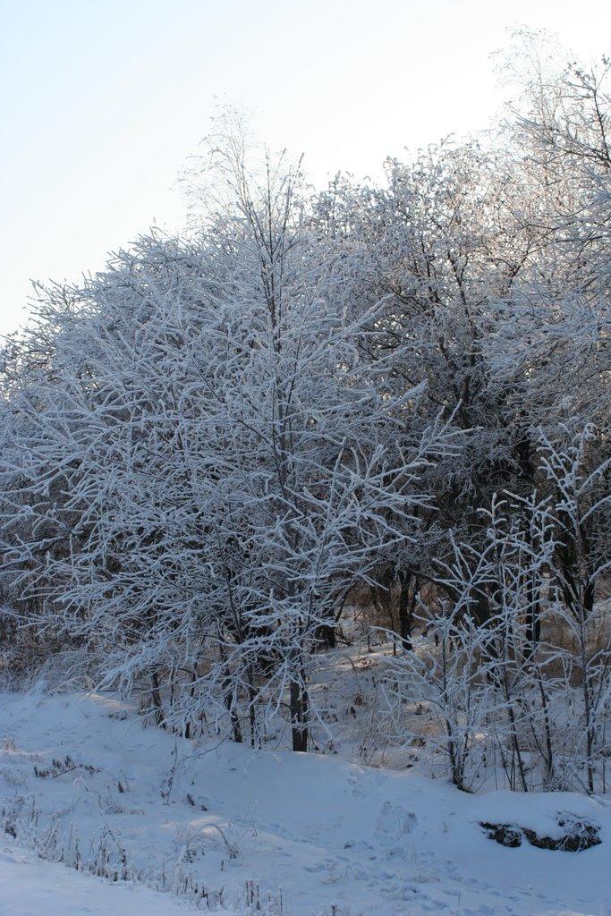 из лесу вышел был сильныййй мороз, Ромны