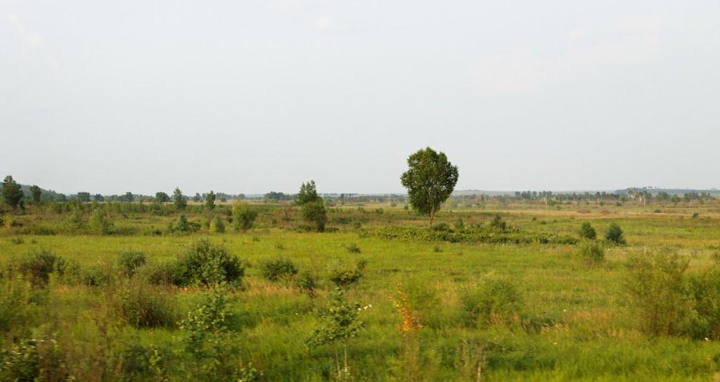 Amur Region Landscape / Амурский пейзаж, Ромны