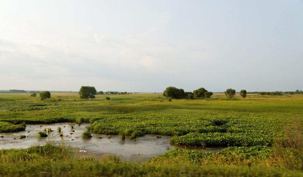 Roadside Swamp / Придорожное болотце, Ромны