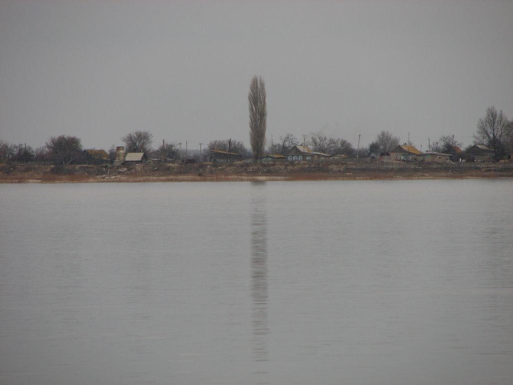 Одинокий тополь в Лебяжьем, Нариманов