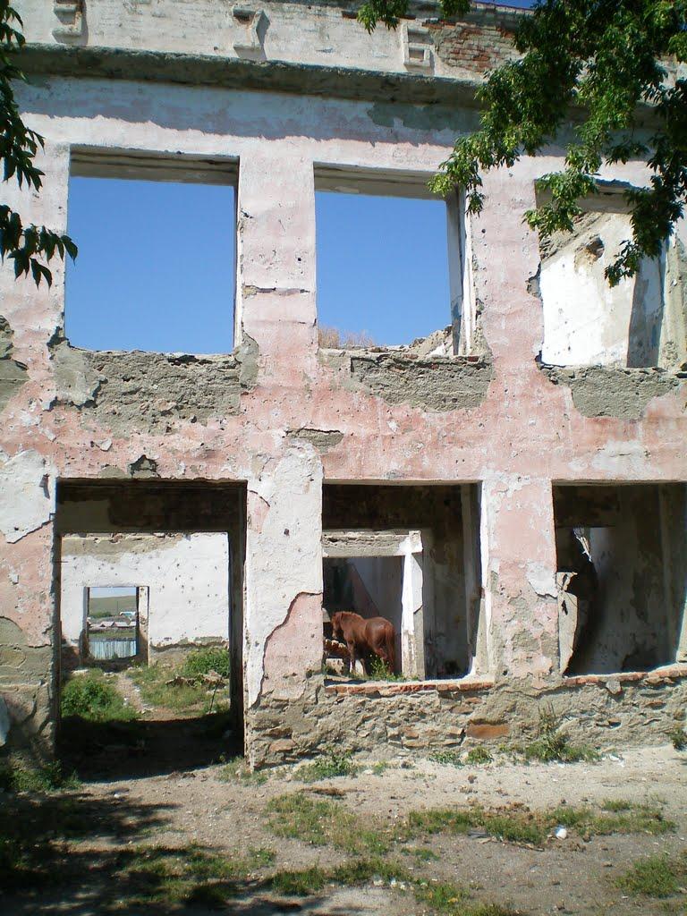Конь в школе), Баймак