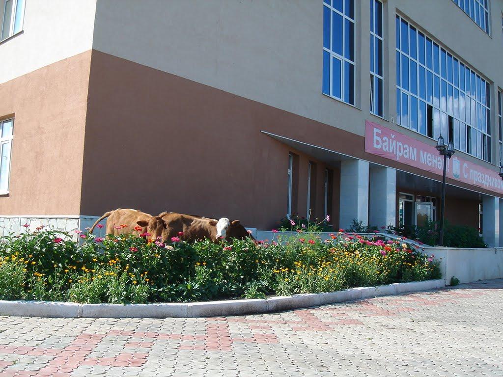 Дом культуры в селе Исянгулово, Исянгулово
