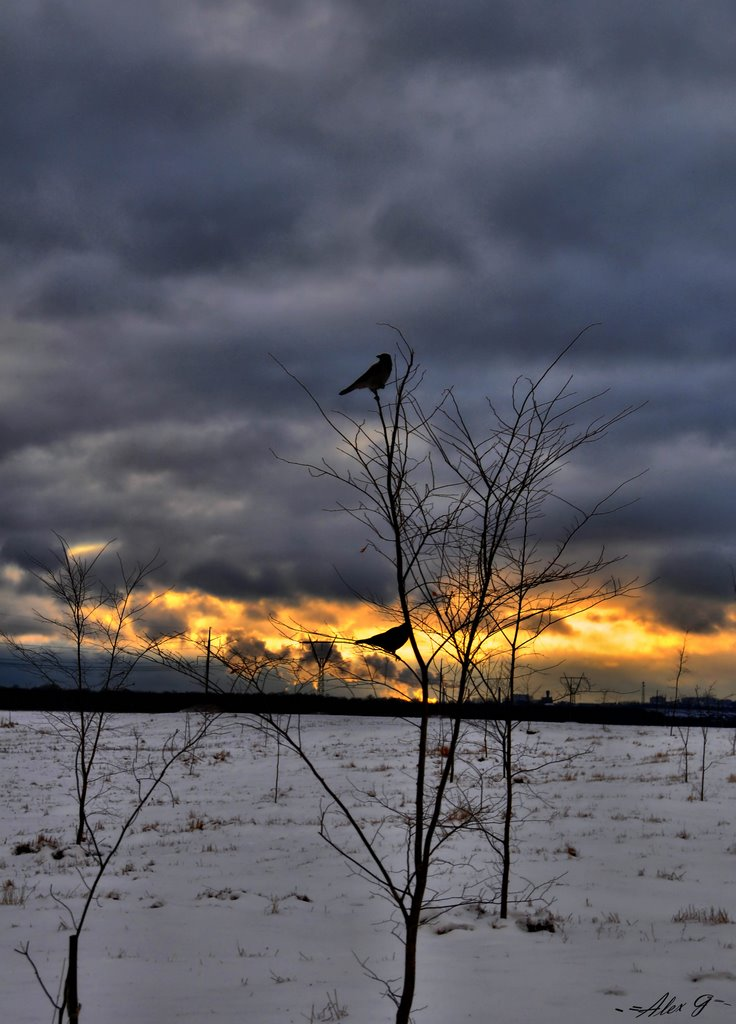 the crows and sunset, Кокаревка