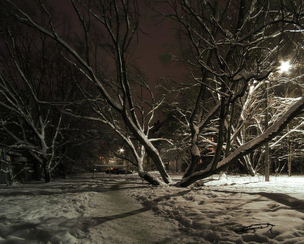 Старое дерево, Покров