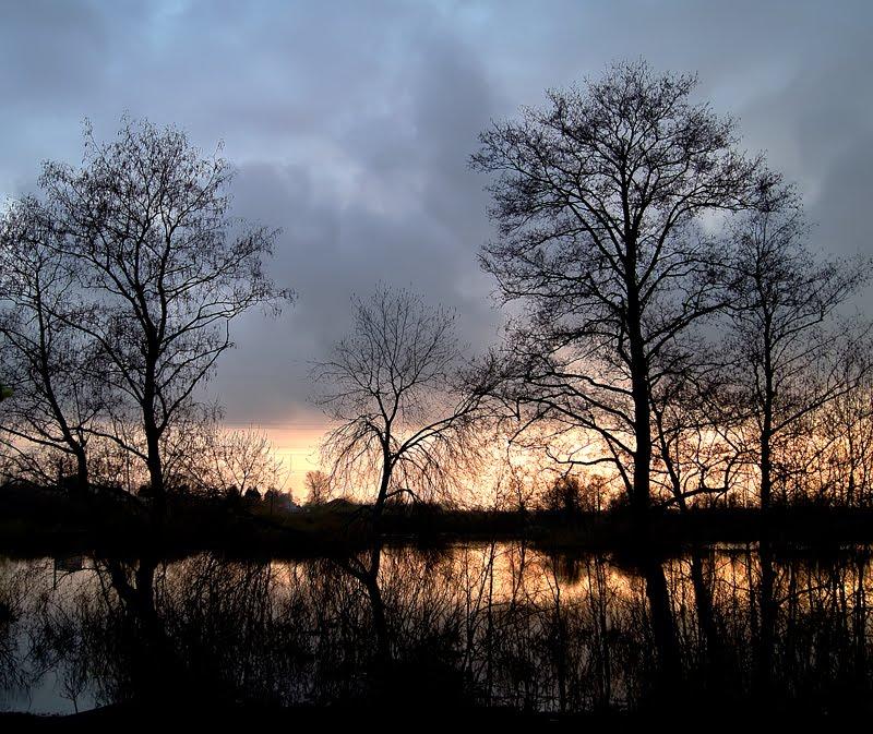 Деревья на закате 2, Собинка