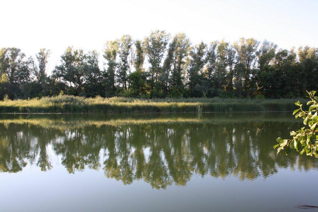 "Жирновск. ""Дубы"". Август 2010., Жирновск"