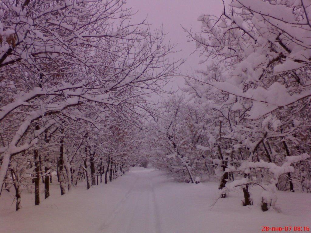 Снежок,2007год, Калач-на-Дону