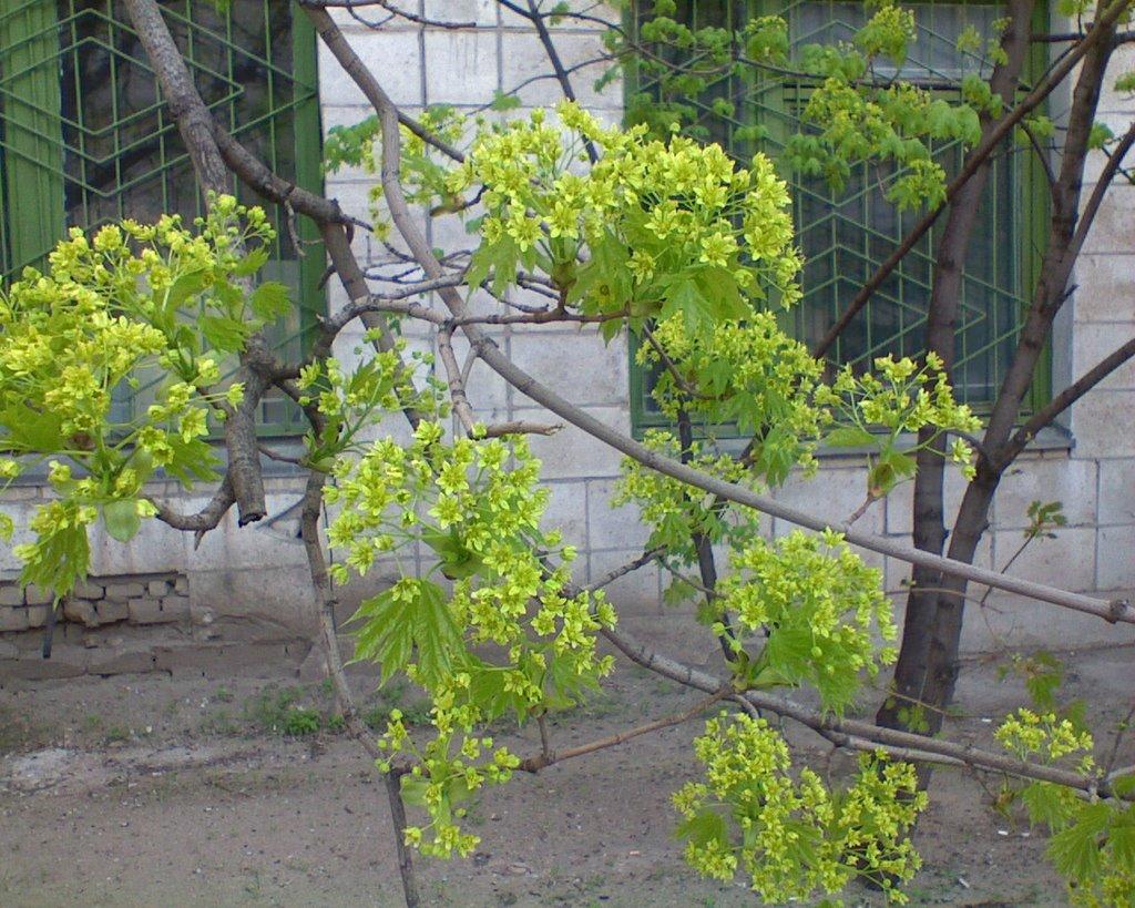 Весна в Калаче, Калач-на-Дону