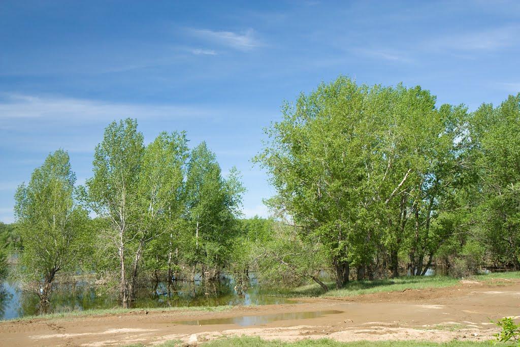 Начало спада воды / The beginning of recession of water, Средняя Ахтуба