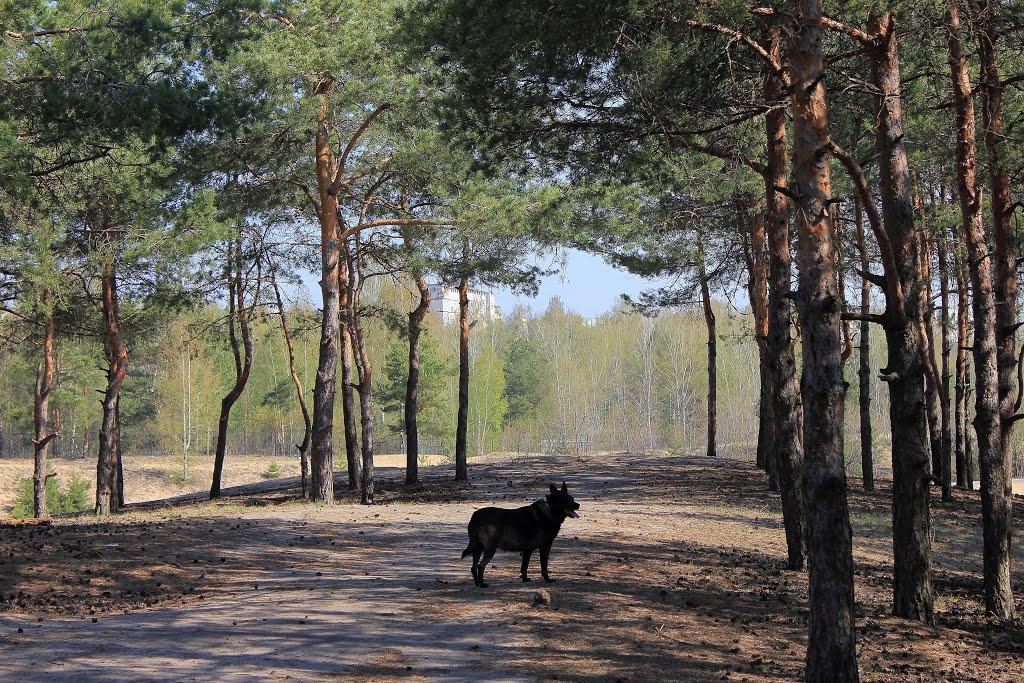 на прогулке / On walk, Дзержинск