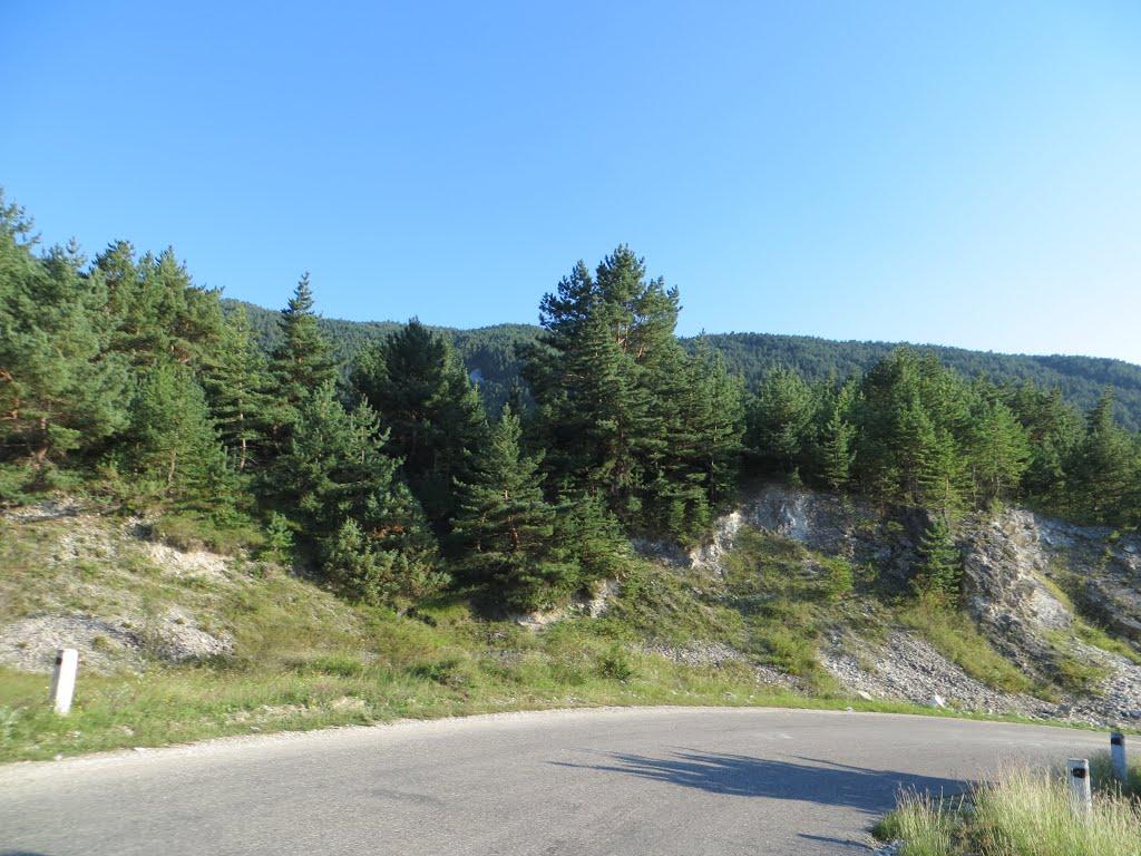 Перевал лес, Гергебиль