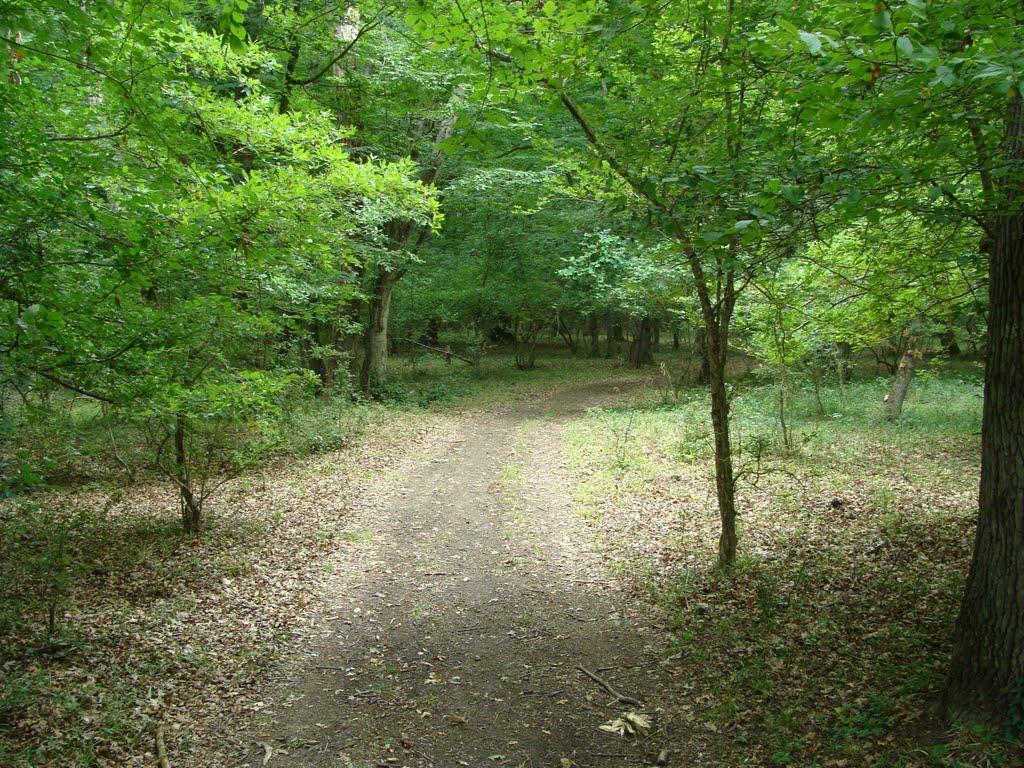 старая Яламинская дорога, Курах